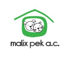 Pro Bono Work: Malix Pek Dog Shelter & Caritas Quintana Roo